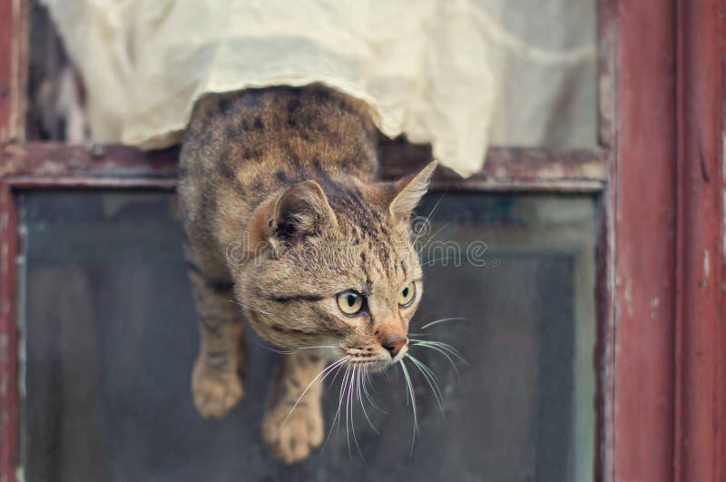 El gato de Brown sale de la ventana imagenes de archivo