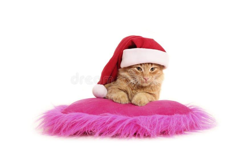 El gato de la Navidad se relaja en la almohadilla imagen de archivo libre de regalías