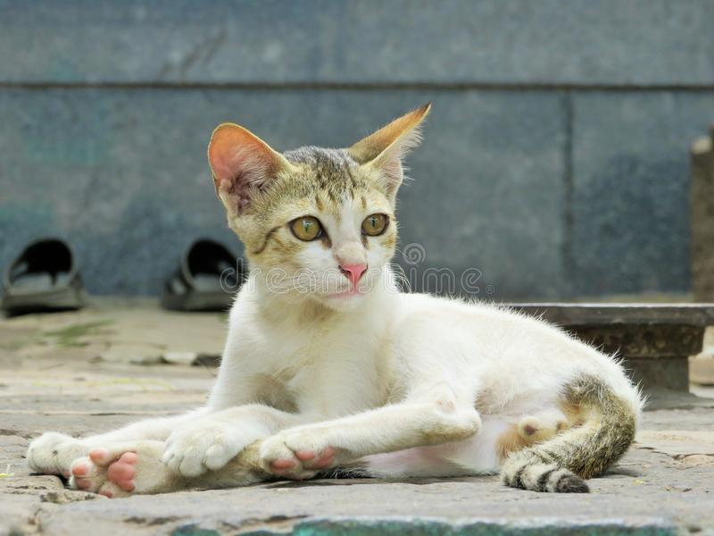 El gato del amante fotos de archivo