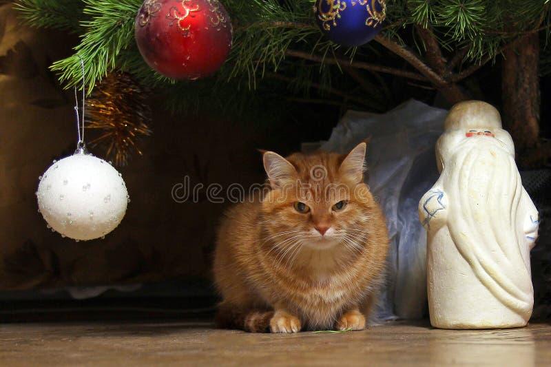 el gato del jengibre se sienta debajo del nuevo Year& x27; s adornó el árbol de navidad con la figura de Santa Claus foto de archivo libre de regalías