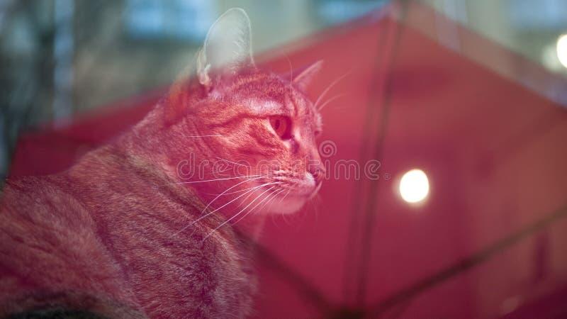 El gato detrás de la ventana fotografía de archivo libre de regalías
