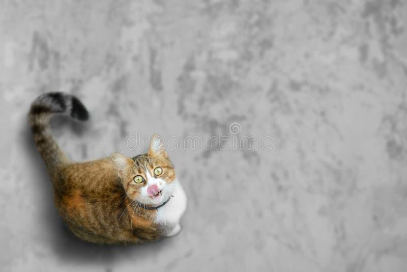 El gato divertido busca delicioso fotografía de archivo libre de regalías