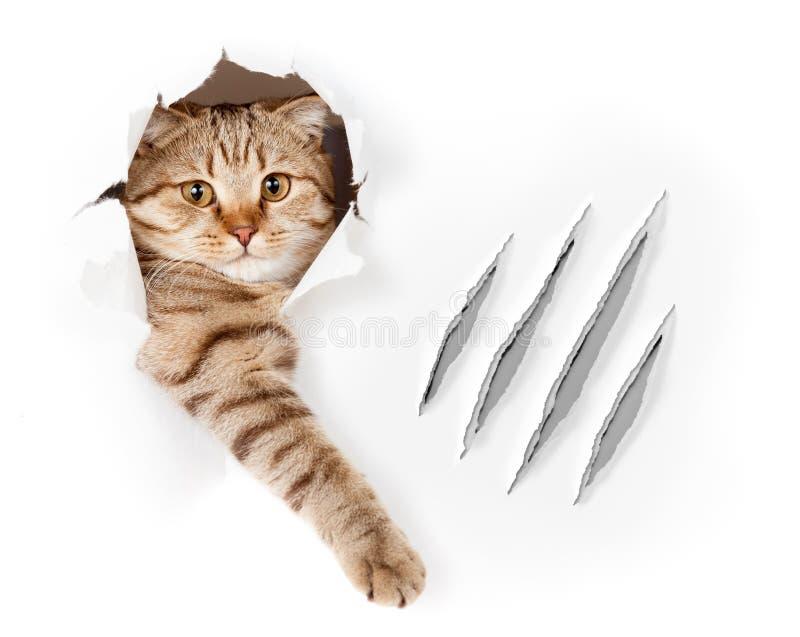 El gato divertido en agujero del papel pintado con la garra rasguña imagen de archivo libre de regalías