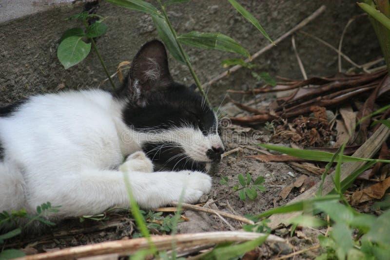 El gato el dormir fotografía de archivo libre de regalías