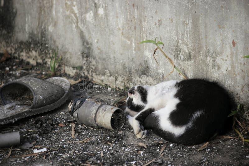 El gato el dormir foto de archivo