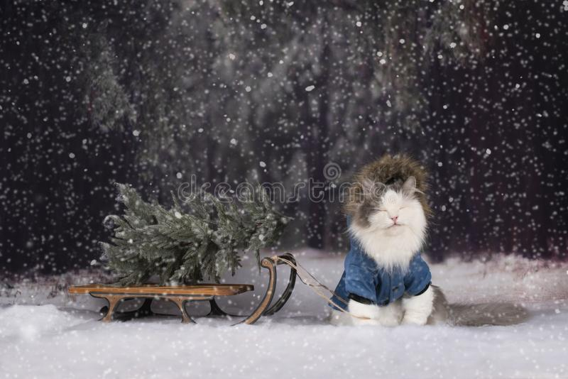 El gato en el bosque del invierno vino para el árbol de navidad fotos de archivo libres de regalías