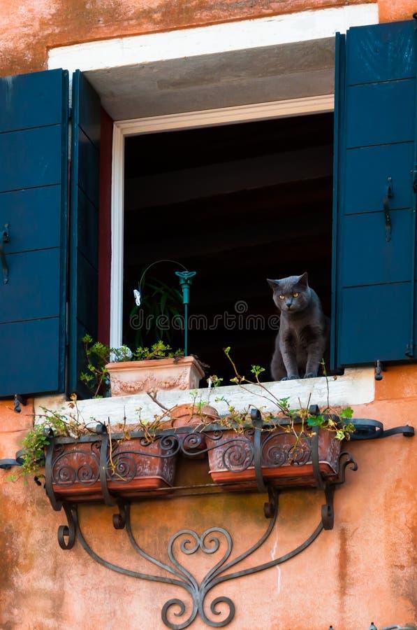 El gato en la ventana fotografía de archivo