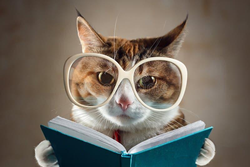 El gato en los vidrios que sostienen un libro de la turquesa y mira estrictamente en la cámara Concepto de educación foto de archivo libre de regalías