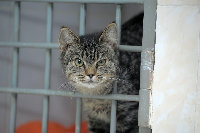 El gato en un refugio, pide tomarlo casero fotografía de archivo