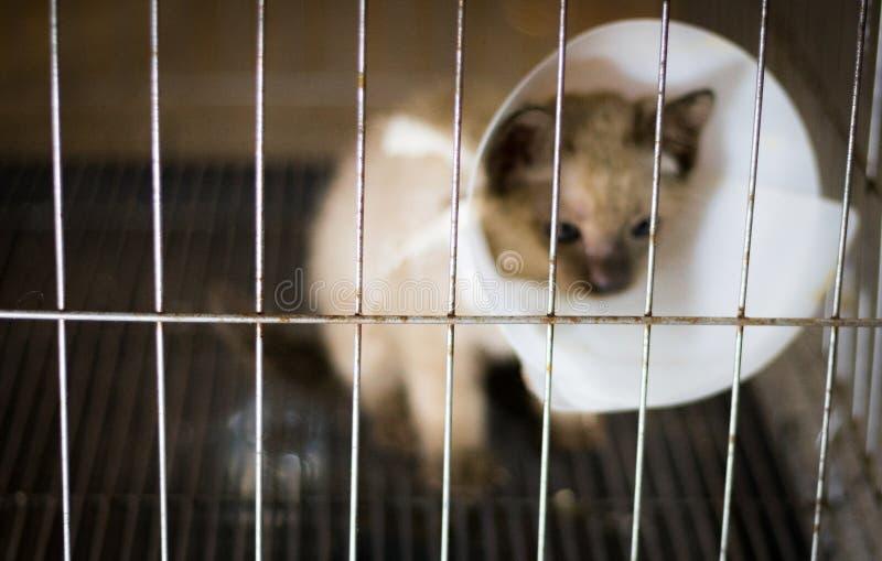 El gato enfermo de la falta de definición abstracta en jaula de protección, mira deprimido y s foto de archivo libre de regalías