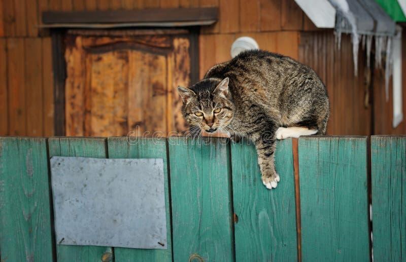 El gato enojado se sienta en una cerca foto de archivo