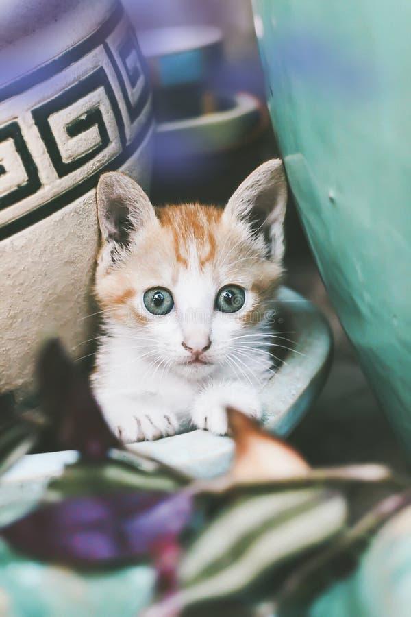 El gato es muy precioso en el jard?n imagen de archivo libre de regalías