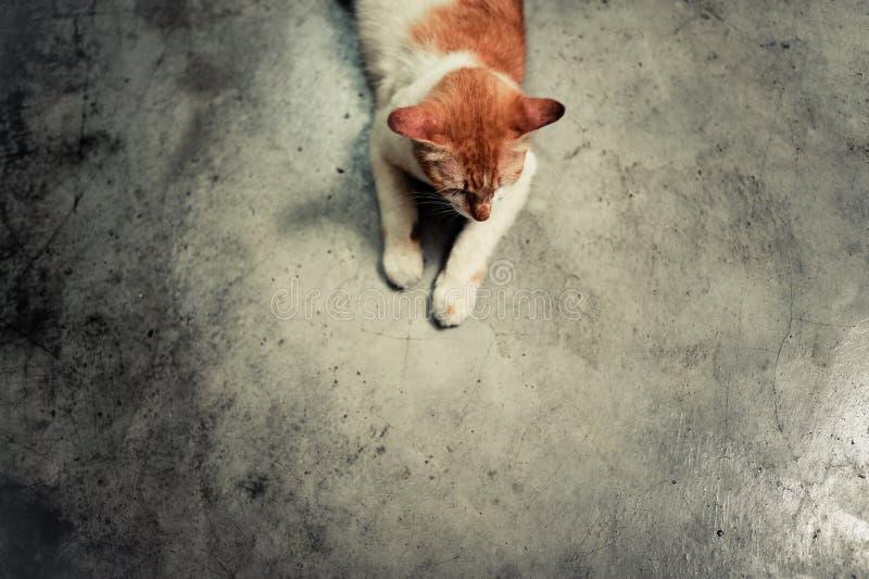 El gato espera su cena imagenes de archivo
