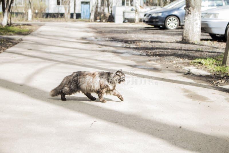 El gato está caminando a lo largo de la calle fotos de archivo