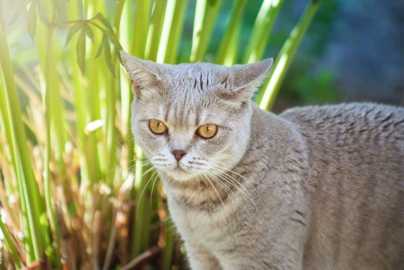El gato está cazando en la hierba foto de archivo libre de regalías