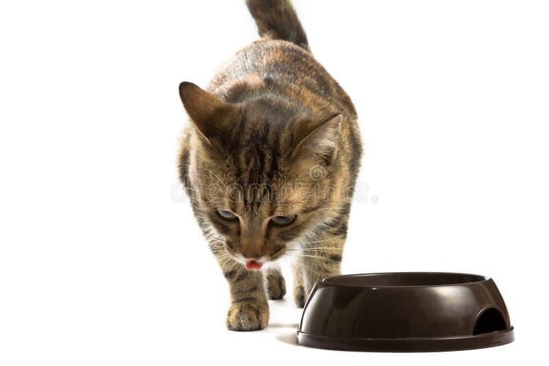 El gato está alimentando desde un cuenco foto de archivo