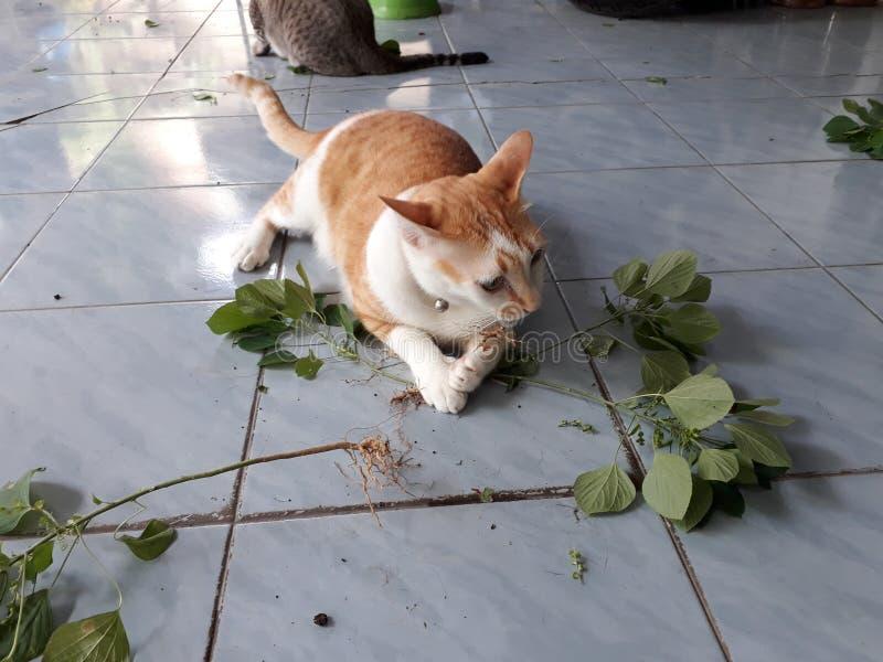 El gato está comiendo las raíces del árbol, mintiendo en el piso imagenes de archivo