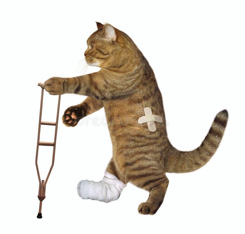 El gato está en la muleta foto de archivo libre de regalías