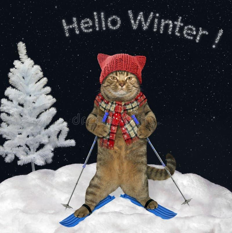 El gato está esquiando cuesta abajo 2 imágenes de archivo libres de regalías
