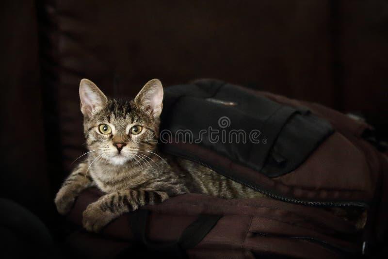 El gato está fuera del bolso imagenes de archivo