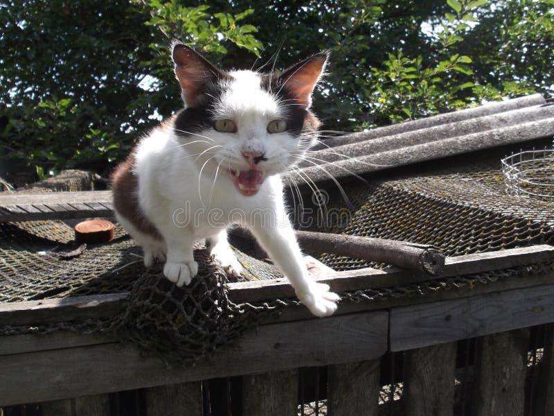 El gato está hablando con el fotógrafo imagen de archivo libre de regalías