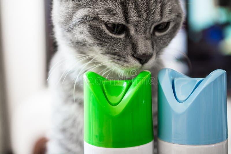 El gato está oliendo el cilindro del ambientador de aire fotografía de archivo
