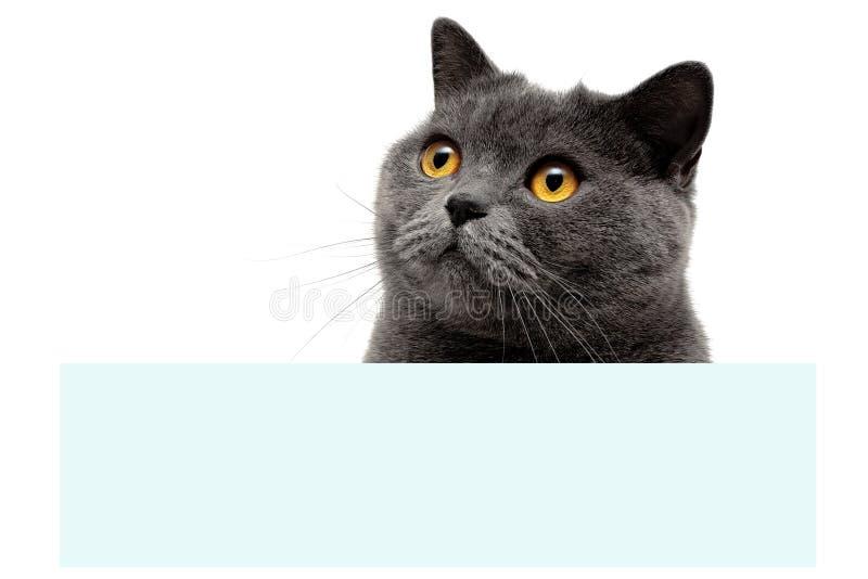 El gato gris con amarillo observa sentarse en la bandera fotografía de archivo libre de regalías