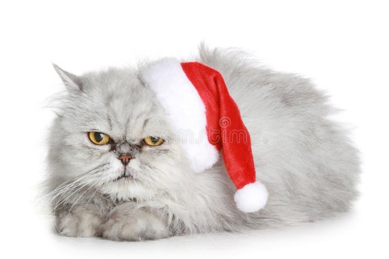 El gato gris descontento en un sombrero de la Navidad fotos de archivo libres de regalías