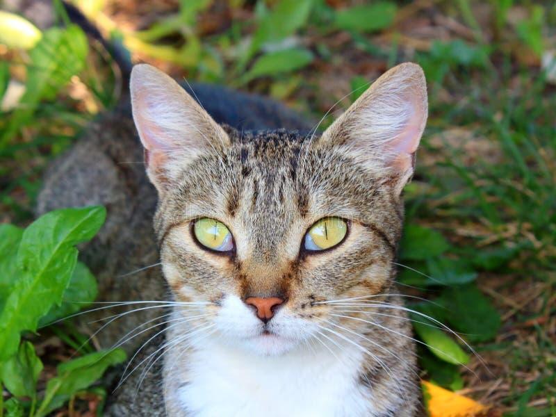 El gato gris mira en el marco fotografía de archivo