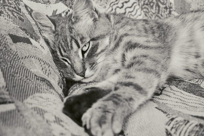 El gato gris a rayas sobre la silla de colores similares. Amo del disfraz fotografía de archivo