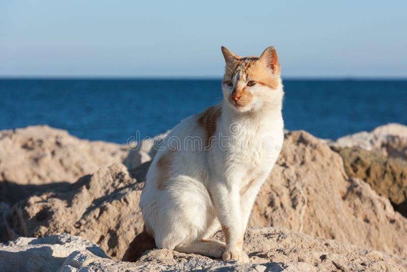 El gato hambriento que espera en piedra cerca de un mar barcos de pesca para volver, esperando consigue un poco de comida imagen de archivo libre de regalías