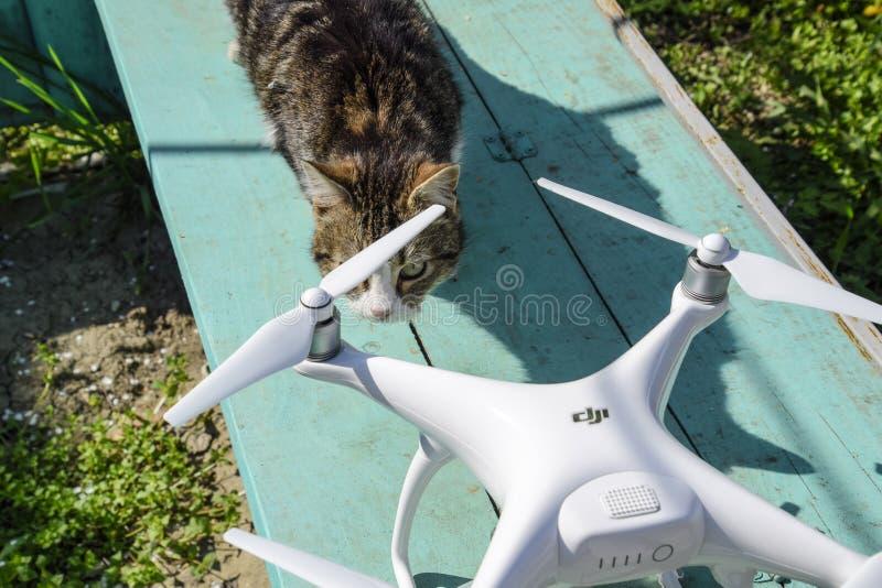 El gato huele el fantasma 4 del abejón DJI Sorprenda el animal con un nuevo artilugio Quadrocopter y animal doméstico Gato y abej imagen de archivo