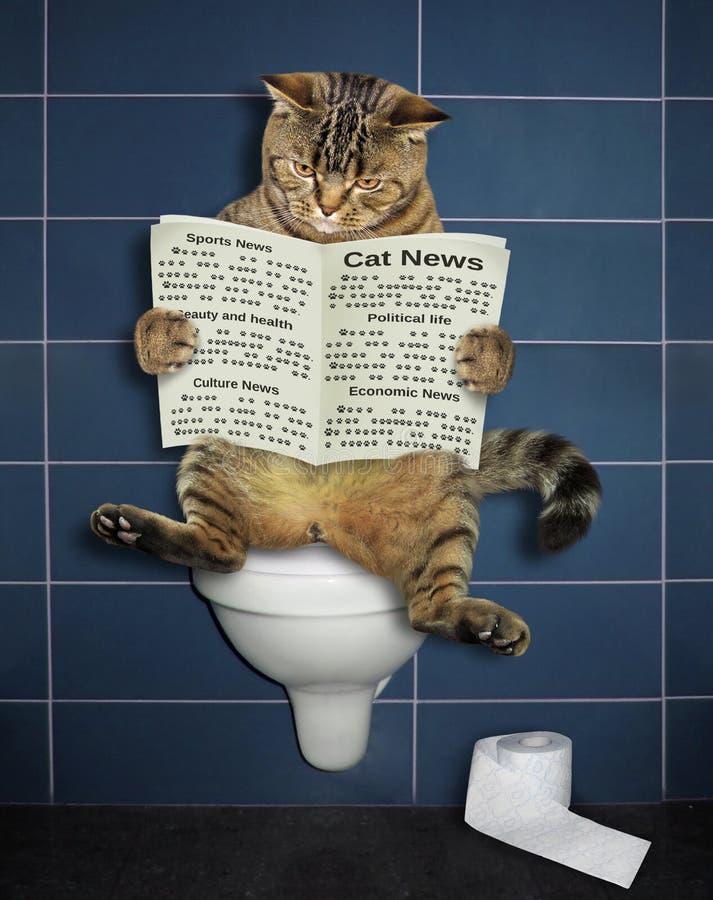 El gato lee un periódico en el retrete fotos de archivo