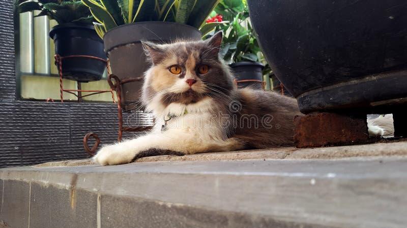 El gato lindo imagenes de archivo