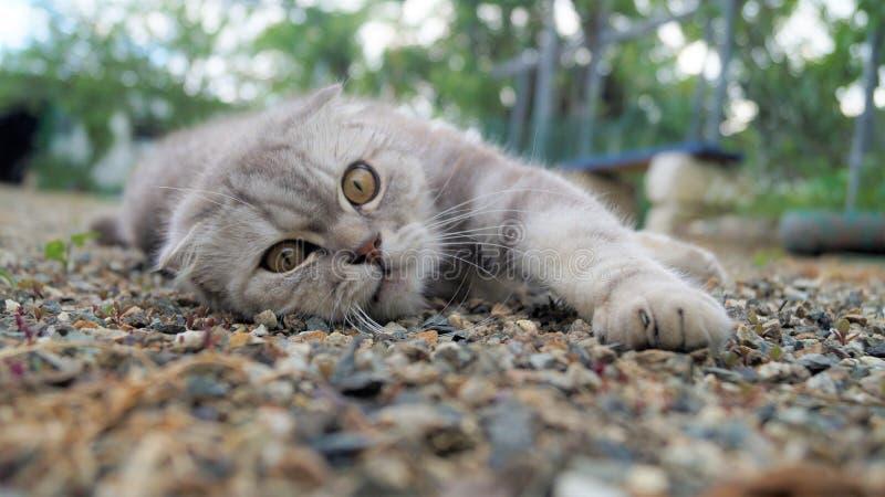 el gato lindo apacible goza el relajarse en los guijarros fotografía de archivo
