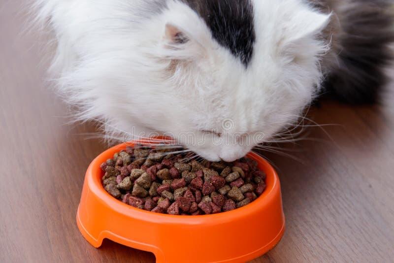 El gato lindo mullido come la comida para gatos seca fotos de archivo