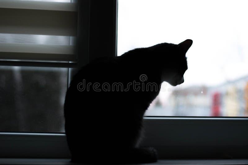 El gato mira en la ventana foto de archivo
