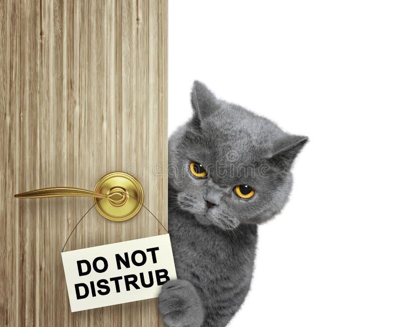El gato mira a escondidas hacia fuera de detrás la puerta No disturbe Aislado en blanco foto de archivo libre de regalías