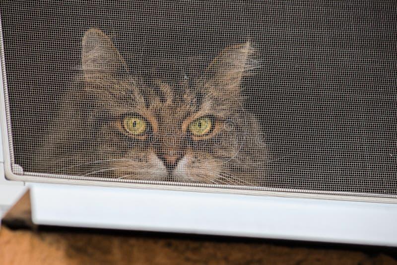 El gato mira hacia fuera de detrás la malla protectora en la ventana foto de archivo libre de regalías