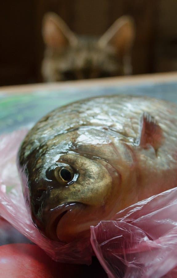 El gato mira pescados crudos antes de cocinar fotografía de archivo