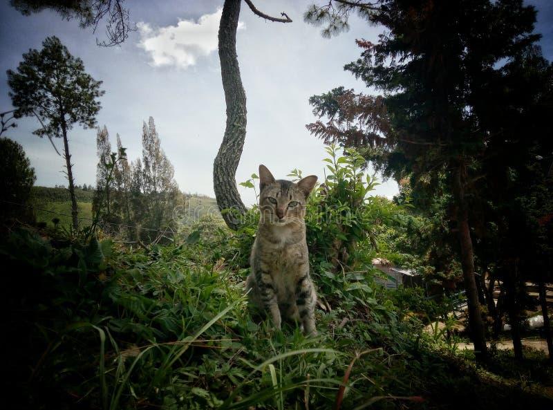 El gato modelo está modelando imágenes de archivo libres de regalías