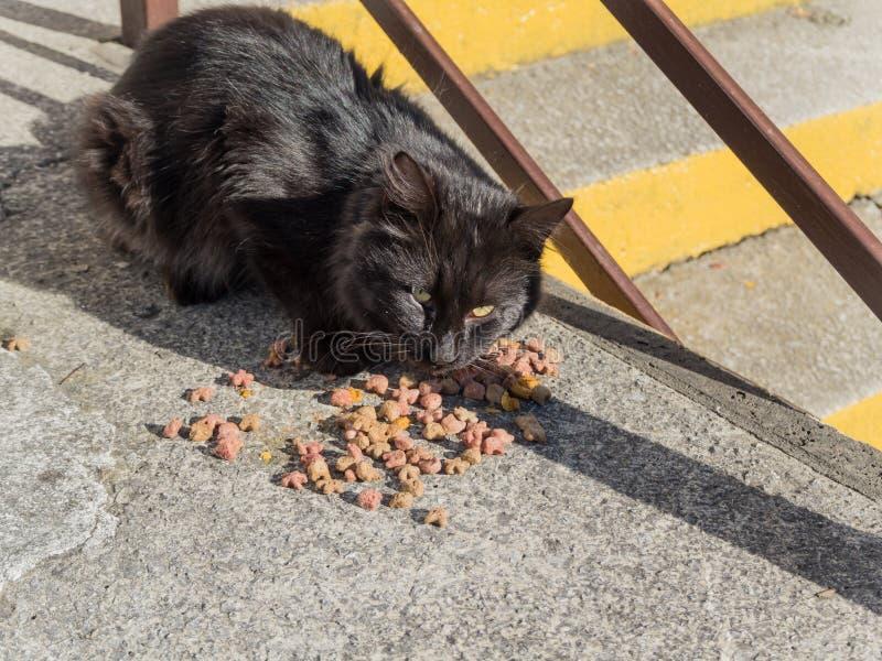 El gato mullido negro come la comida de la tierra fotos de archivo