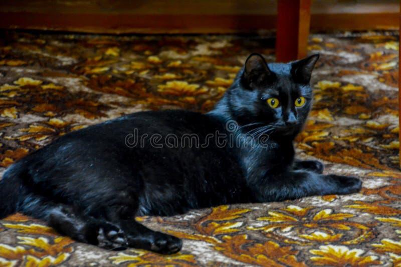 El gato negro con los ojos amarillos que mienten en la alfombra imagen de archivo libre de regalías