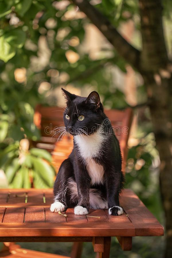 El gato negro est? cazando en el jard?n imágenes de archivo libres de regalías