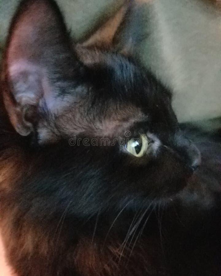 El gato negro oye un sonido imagen de archivo