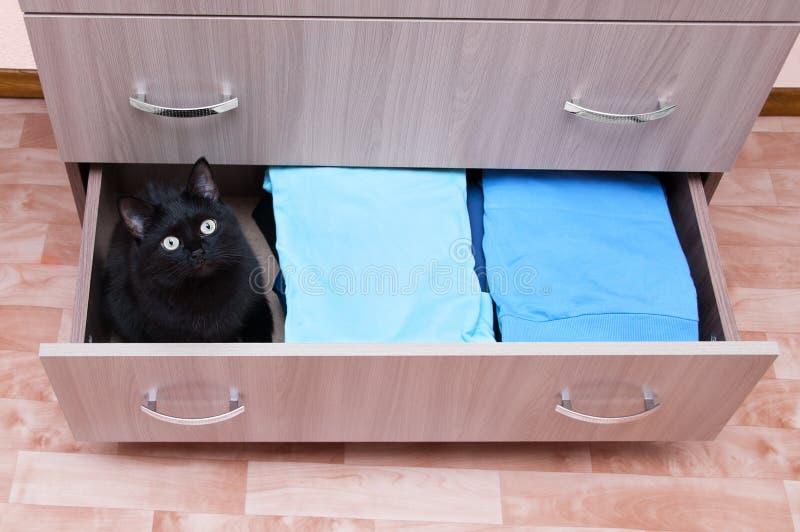 El gato negro se sienta en un cajón a pecho abierto Casas en el cuarto imagenes de archivo