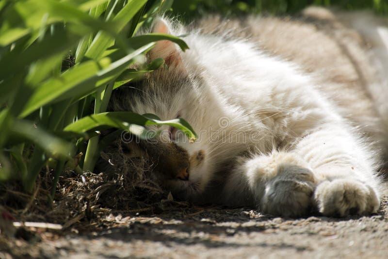 El gato perdido está durmiendo dulce debajo de un arbusto foto de archivo libre de regalías