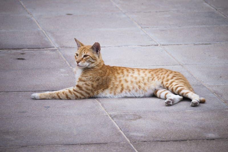 El gato perdido se relaja en Abu Dhabi imágenes de archivo libres de regalías