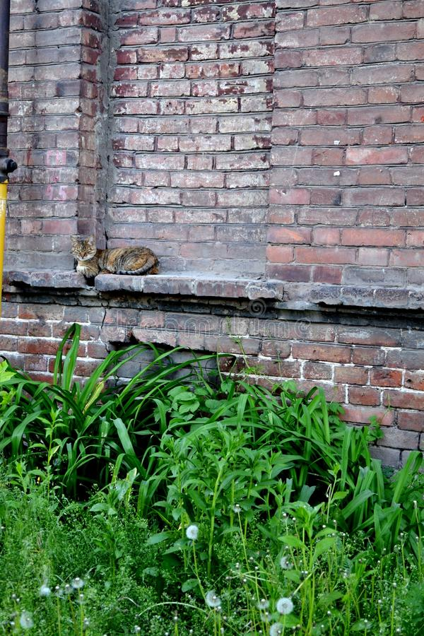 El gato que apenas que duerme en las paredes de la casa vieja imágenes de archivo libres de regalías