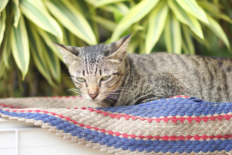El gato que duerme en el felpudo imagen de archivo